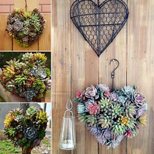 Heart Iron Hanging Plant Basket Garden Succulent Flower Pot Hook Decorations