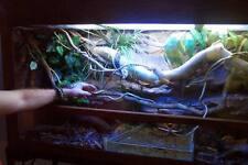Extra Large Snake/Reptile Terrarium