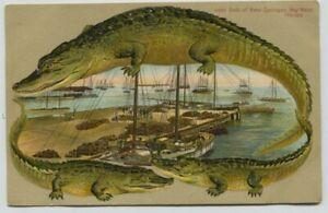 1910 era Alligator Border Sponges Key West Florida Postcard Very Nice!