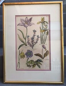 SIR JOHN HILL HAND-COLORED ENGRAVING BOTANICAL FLOWER STUDY