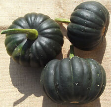 SQUASH Black Futsu. ORGANIC SEED. Firm flesh hazelnut flavour. Dark green skin.