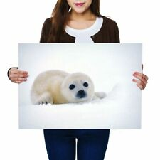 A2 - Winter Snow White Seal Cub Poster 59.4X42cm280gsm #46458