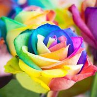 200Pcs Bunte Regenbogen Rose Blumensamen Garten Pflanzen Multi Color Dekor I8V1