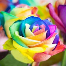 200Pcs Colorful Rainbow Rose Flower Seeds Home Garden Plants Multi-Color Hot Hot