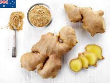 Ginger Spice Seeds 100 Spice Vegetable Seed Plant Australia