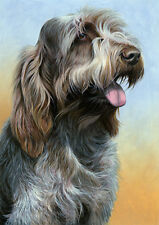 More details for nigel hemming just dogs - brown roan italian spinone 2 - spinoni gun dogs print