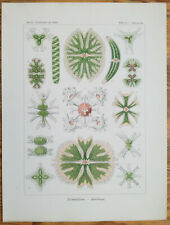 ERNST HAECKEL: Kunstformen Desmidiea Algae (No. 24) 1st. Edition - 1900