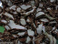 70gr Sliced Aromatic Ginger / Kaempferia Galanga (Kencur)