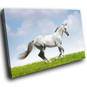 White Horse Green Blue Funky Animal Canvas Wall Art Large Picture Prints