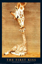THE FIRST KISS - GIRAFFE & BABY POSTER - 24x36 NATURE ANIMAL PHOTO 2670