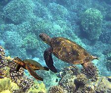 SEA TURTLES OCEAN LIFE COMPUTER MOUSE PAD 9X7