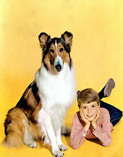 JON PROVOST UNSIGNED PHOTO - 5797 - LASSIE