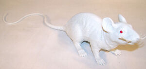 GIANT SIZE WHITE RUBBER 17 IN RAT fake mouse play rats large halloween prop new