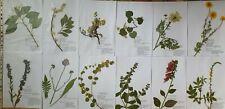 Herbarium 40 Pflanzen