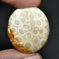 Cts. 47.5 Natural Fabulous Fossil Coral Cabochon Oval Cab Loose Gemstone
