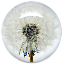 Medium Dandelion Paperweight made with a real flower