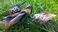 Arbre de NOel Décorations-artificielle Safari Style Plume Oiseau Clips-Lot de 3