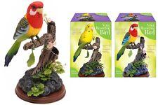 Nouveau enregistrement vocal perroquet oiseau Talk Back Fantaisie Cadeau parlant Enregistreur