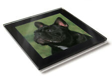FRENCH BULL DOG Dog Puppy Premium Glass Table Coaster with Gift Box