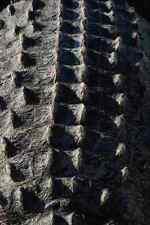 703039 Aligator Detail A4 Photo Texture Print