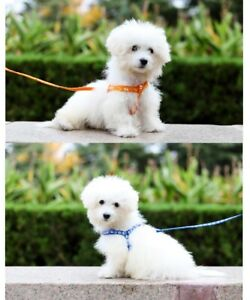 Brand New Pet Chest Strap Mesh Pet Leash Dog Harness Dog Lead No Color Choice