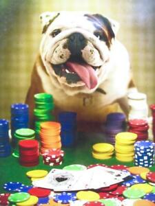 """You're Aces!"" FUNNY BULLDOG BIRTHDAY CARD Avanti Press DOG PLAYING POKER CASINO"