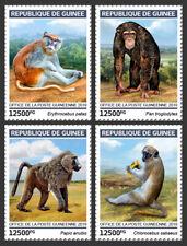 Guinea 2019 fauna Primates monkeys chimpanzee S201904