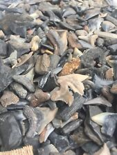 100 Shark Teeth Fossil Hemi Tiger Megalodon Era Tooth Necklace Jewelry Kids Bulk