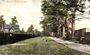 CIRCA 1906 POSTCARD: BEECH WALK, LEIGH, WIGAN, GREATER MANCHESTER