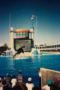 Captive Killer Whale FOUND PHOTOGRAPH Color Snapshot VINTAGE 13 27 M
