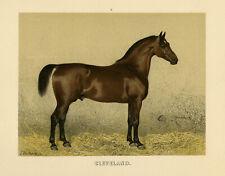 Antique Print-CLEVELAND BAY HORSE-ENGLAND-PL. 7-Volkers-1880