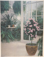 Diane Romanello 'Patio Light' 1999, Limited Edition Giclee Print 68/300