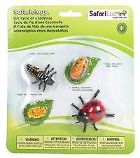 S662716 Safari Wissenschaft - Lebenszyklus eines Marienkäfers (Set)