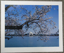 Jefferson Memorial Cherry Blossoms Vintage 1980 Jack Novack Poster Photo Print