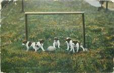 Postcard Animals cute puppies dogs in a football team