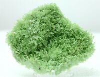"3.1"" TOP FINE GYPSUM VAR. GREEN SELENITE FROM MT. GUNSON, AUSTRALIA (5168)"