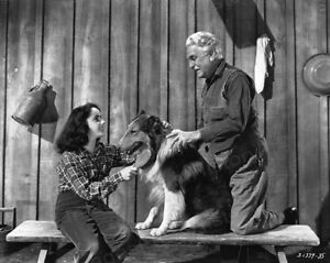 8x10 Print Frank Morgan Elizabeth Taylor The Courage of Lassie 1946 #ETLA