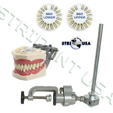 Dental Typodont 860, Teeth Set & Pole Mount Compatible w/ Columbia Brand Teeth
