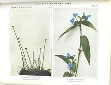Wild Flowers of New York by House 2 Volume Set w/ Color Plates 1918