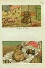 Dogs - Cat - Pig - Keep Your  Distance -Tenants in Common - by S. T. Dadd -1886