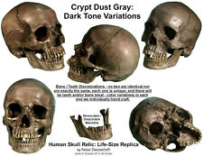 """Authentic Human Skull-Life Size Replica Aged Relic """"Crypt Dust Gray"""" Made in USA"""