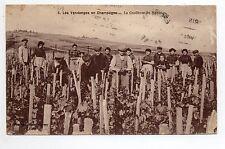 CHAMPAGNE CPA 51 Vins Vignes et thémes Vendanges paniers la cueillette du raisin