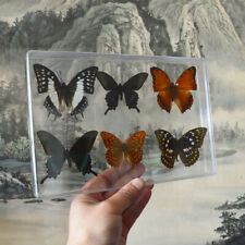 6pcs Pretty Butterfly Real Specimen Education Material