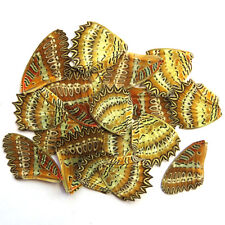 GIFT 20 pcs REAL BUTTERFLY wing material  DIY artwork jewelry  #42_B