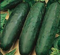 Pepino 50 semillas frescas de Marketer