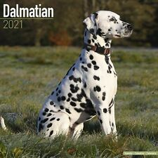 Dalmatian Calendar 2021 Premium Dog Breed Calendars