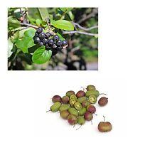 exotisch Garten Pflanze Samen winterhart Sämereien Exot Obstbaum MINIKIWI+ARONIA