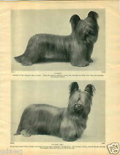 1930 Book Plate Dog Print Skye Terrier Diable Luckie Jim Prince Rufus Cuthbert
