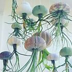 Tillandsia+Jellyfish+Air+Plant+in+Sea+Urchin+-+Floating+houseplant+easy+care