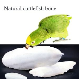 1Bag Cuttle Fish Bone Parrotts Birds Reptiles Tortoise 2021 HOT NEW Food N9A5
